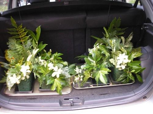 Foliage in car