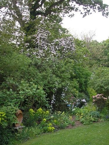 Oak with montana