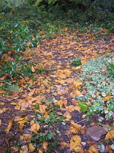Woodland Floor