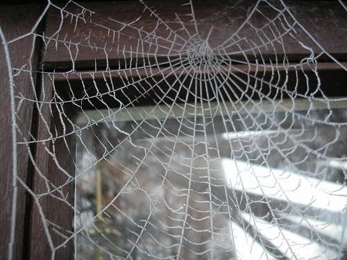 Cobweb