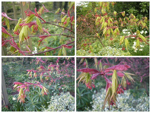 Acer Collage jpg
