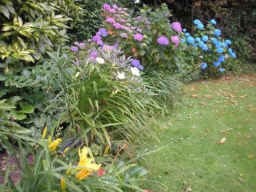 Corner of the back garden.