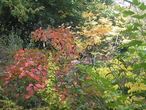 Autumn tints.