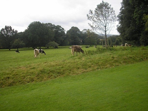 View over fields from garden
