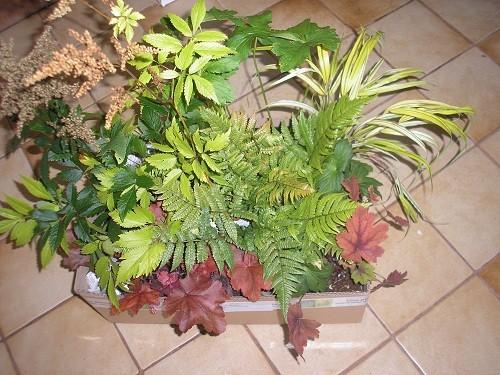 Long Acre plants