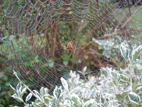 Another web by the dead oak.