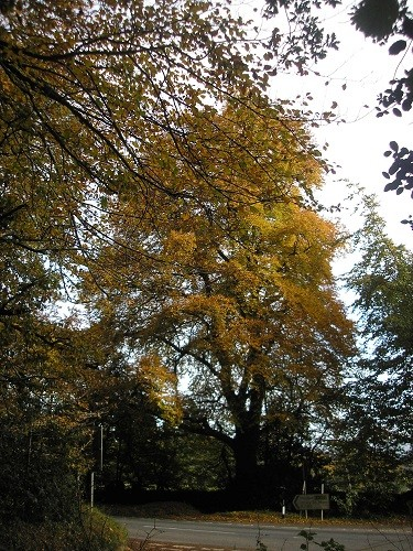 The beech trees seem to have the best colour