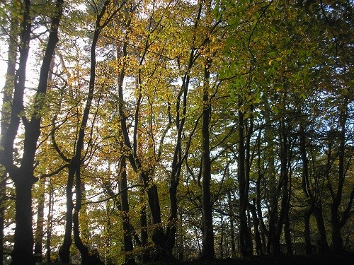 The trees seemed to have the best colour at the edge of the wood where they were in the sun