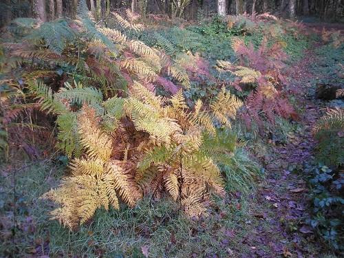 Even the bracken had taken on its autumn colouring.