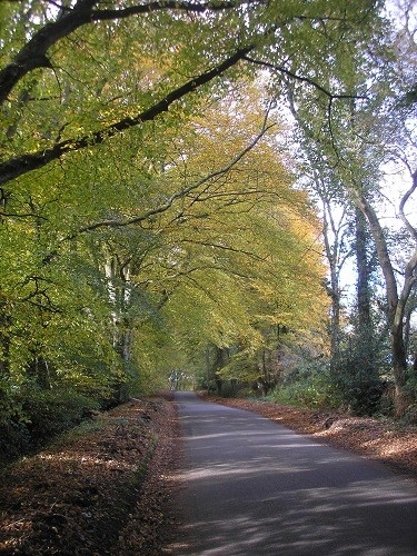 This road is so beautiful too in spring time, when the leaves are such a delicate green.