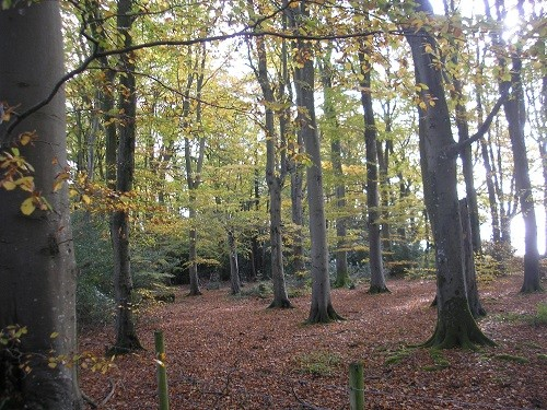 Another of the places where we used to walk our dog - happy memories.