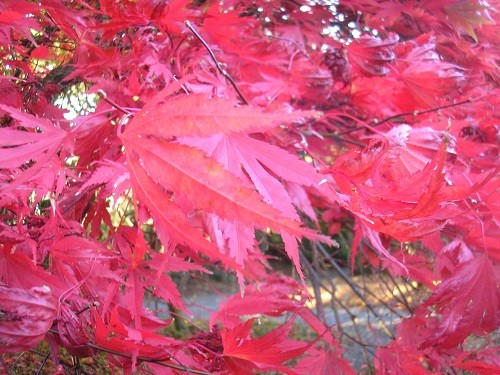 No labels to tell me which Acer this is.