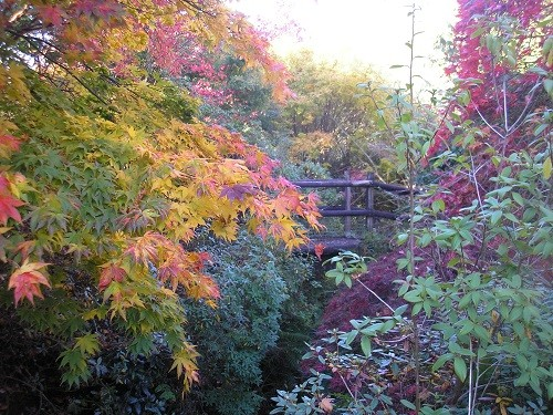 The little bridge at the end is part of a public footpath, so walkers can get a free viewing as they pass through the end of the garden!