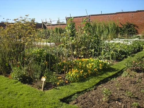 Walled garden Cadhay