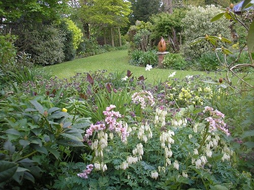 View of back garden with Dicentra
