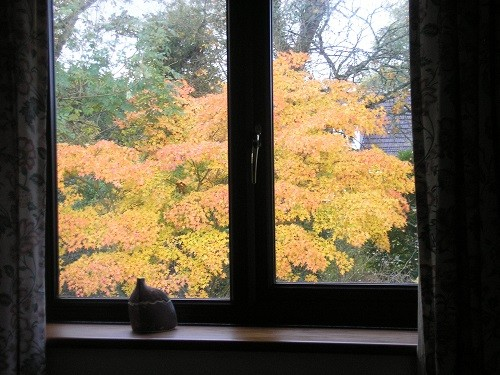 Acer from bedroom