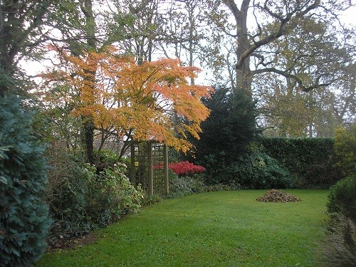 Acers and woodland