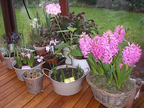 Conservatory flowers.