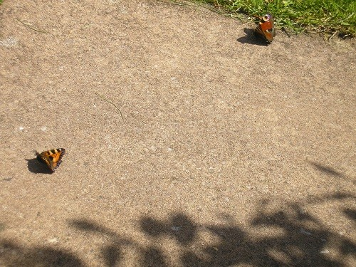 Butterflies on the steps