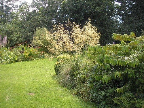 Oak tree border