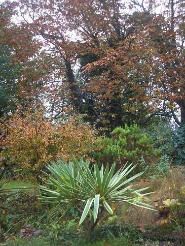 Towards the back garden