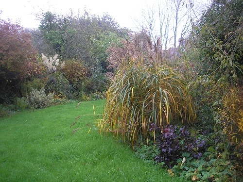 Border by the field with Miscanthus