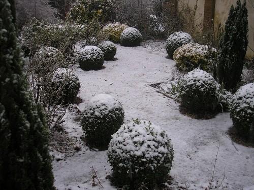 Box balls in the front garden