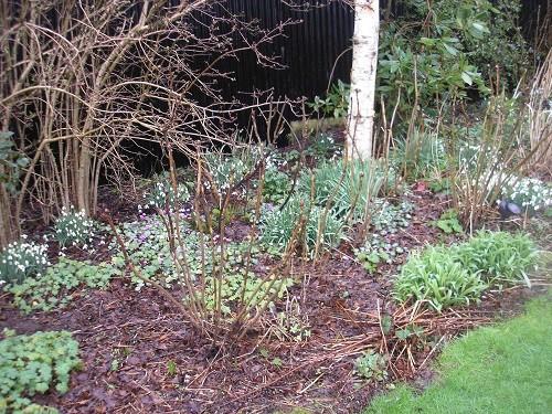 Cherubeer garden.