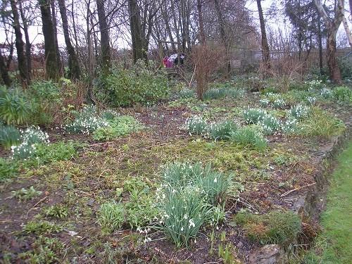 Cherubeer garden