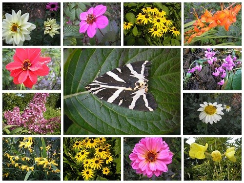 Flowers and moth collage jpg