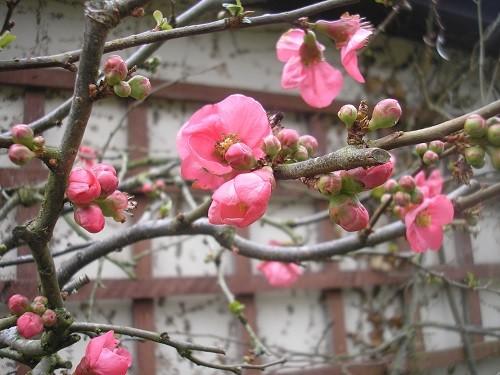 Still flowering by the back door.