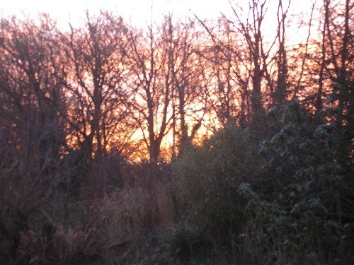Sunrise through the trees.