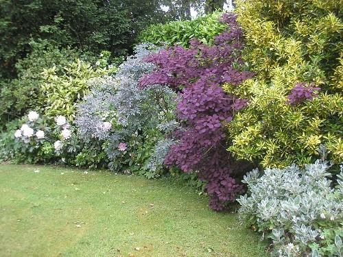 Back garden corner