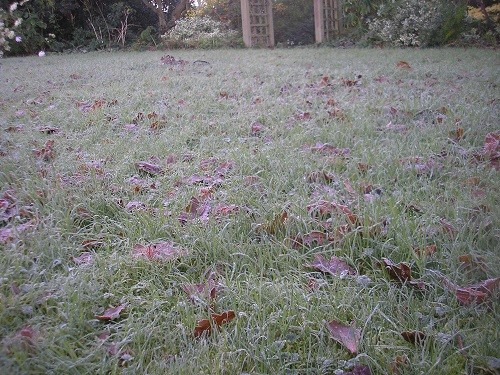 A crisp lawn, I didn't dare to walk on it.