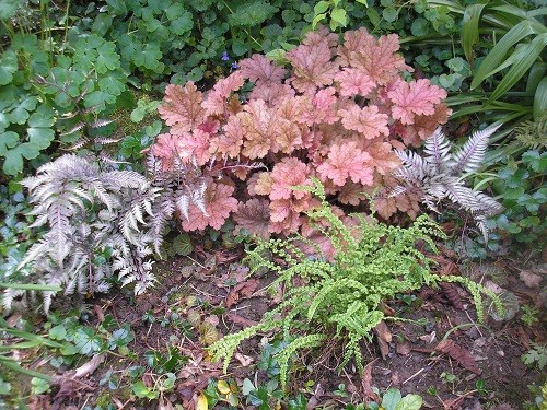 Heuchera and ferns in the border behind the scree. I think a couple of small hostas would look nice here too.