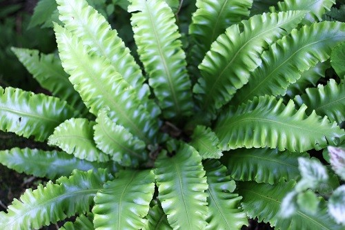 I just love the ruffles on this fern, they catch the little light that there is in the woodland.