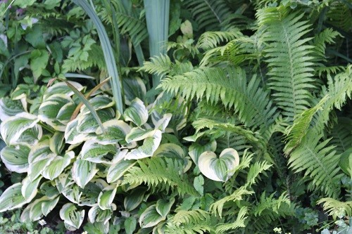 At the far end of the bog, the ferns and hostas are still looking bright and perky.