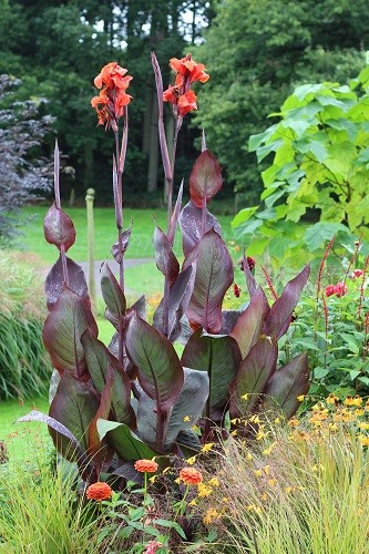 What a fantastic Canna right by the sales area,, the undergardener was very taken with it so I must buy some for him for next year.