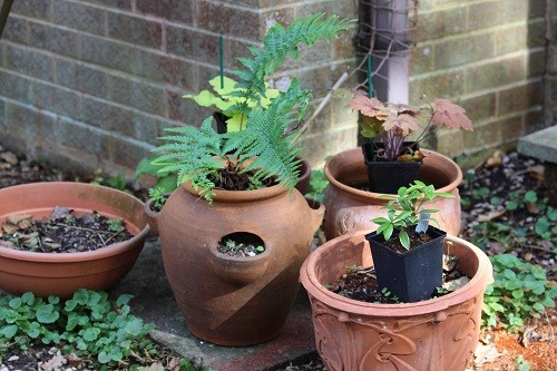 A few pots still waiting to be planted up, I keep finding them or maybe they are breeding!