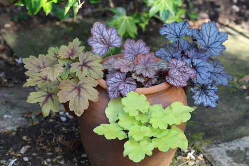 I had to include the new planting in the old strawberry pot, I could swear that they have grown already!