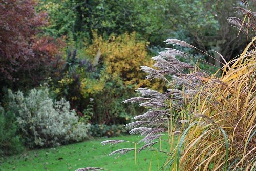 This view is of the Miscanthus malepartus with the border by the field in the background.