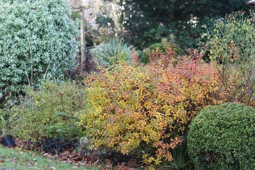 Looking across part of the garden, foliage of various shrubs form a tapestry.
