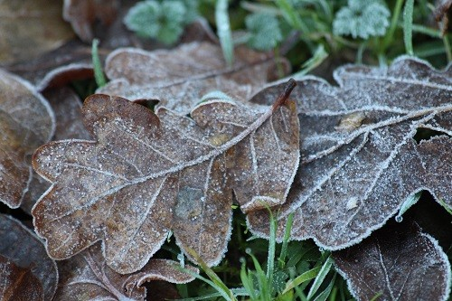 Frosty first thing this morning.