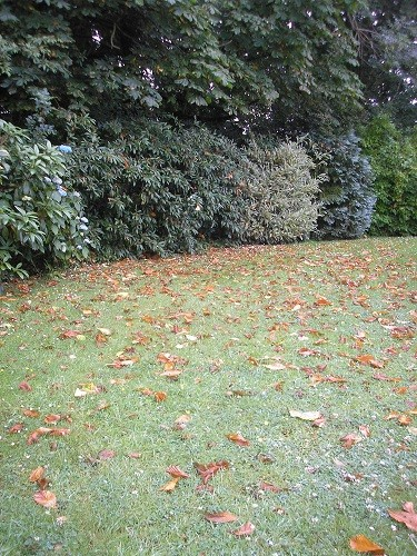 Drought, fallen leaves