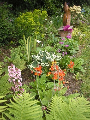 Rainbow in the bog garden