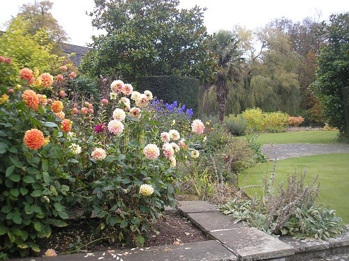 Dahlias with Aconitum in the distance.