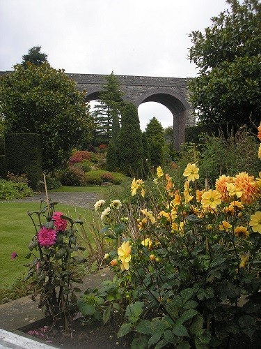 Dahlias with the viaduct.