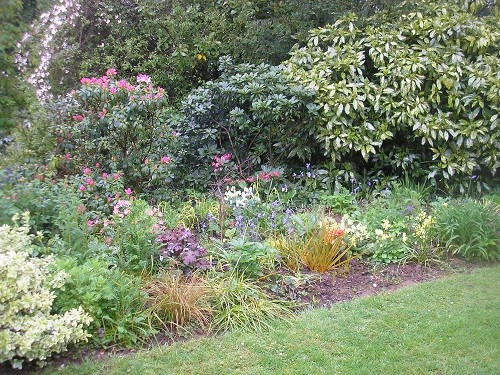The Rhododendron bed with the Clematis montana in the top left hand corner.