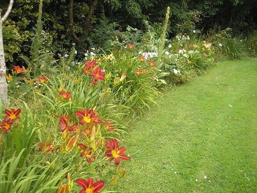 Mainly Hemerocallis