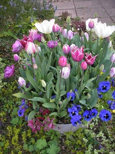 Tulip bath